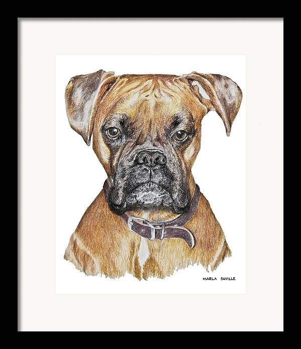 Dog Paintings Framed Print featuring the painting Sweet Boxer by Marla Saville