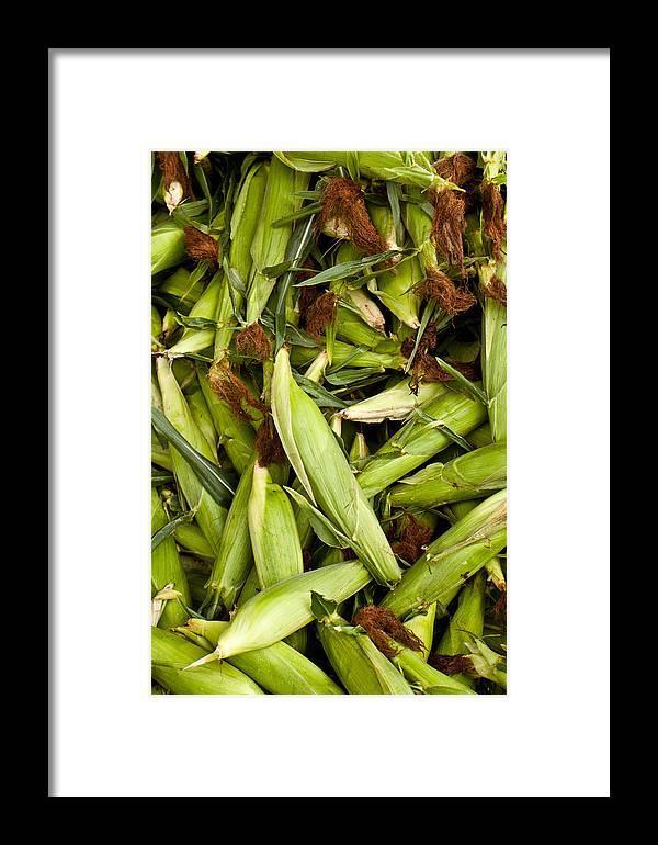 Corn Framed Print featuring the photograph Sweet Corn by Lauri Novak