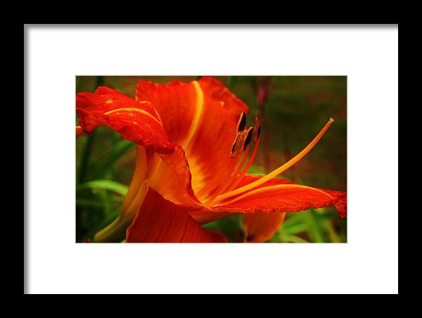 Flora Framed Print featuring the photograph Sweet Fragrance by Bruce Bley