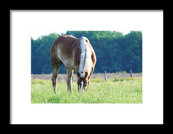 Sweet Grass Framed Print featuring the photograph Sweet Grass by Lila Fisher-Wenzel