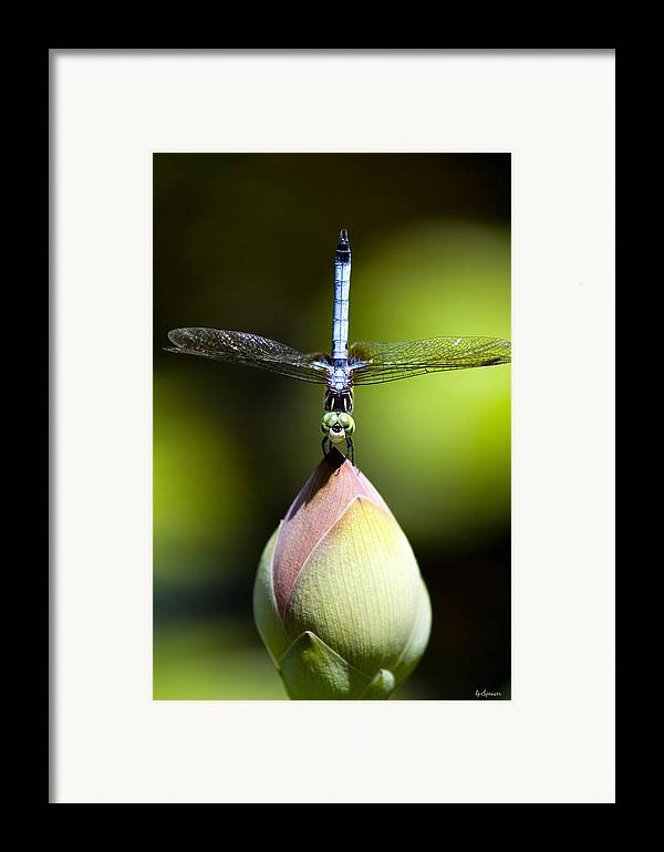 Insects Framed Print featuring the photograph T Shape by Lisa Spencer