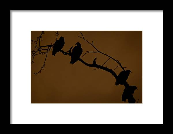 Vultures Framed Print featuring the photograph Take A Number by Kim Henderson
