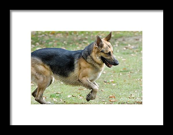 Photography Framed Print featuring the photograph Take Off by Susan Smith
