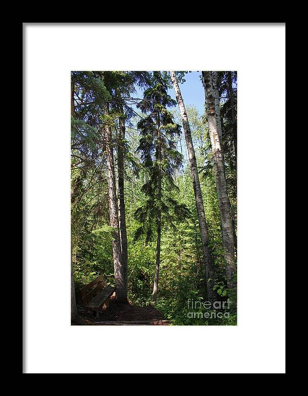 Hiking Framed Print featuring the photograph Tall Trees by Jim Sauchyn