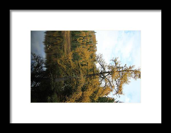 Framed Print featuring the photograph Tamarack In Fall by Joi Electa