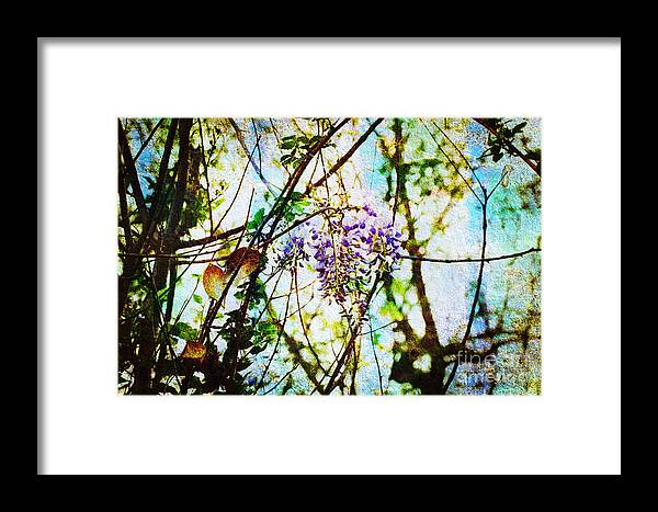Wisteria Framed Print featuring the photograph Tangled Wisteria by Andee Design