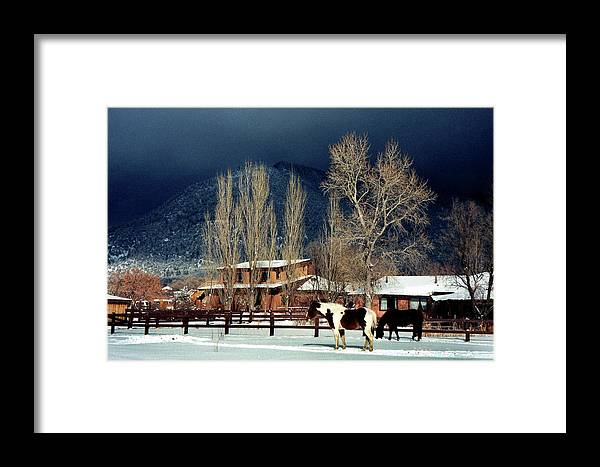 Horse Framed Print featuring the photograph Taos Typical by Ed Golden