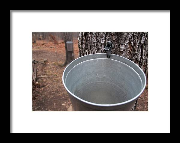 Tapped Framed Print featuring the photograph Tapped by Kim French