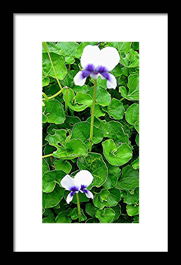 Violets Framed Print featuring the photograph Tasmanian Violets by Sandra Maddox