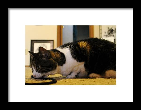 Big Mike Roate Framed Print featuring the photograph Taste Like Chicken by Big Mike Roate