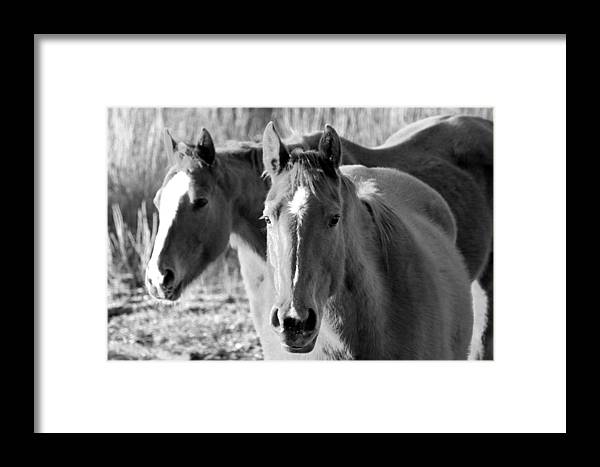 Horses Framed Print featuring the photograph Taylor Horses by Amara Roberts