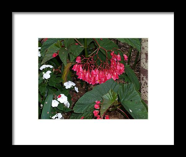Flower Framed Print featuring the photograph Teardrops by Sheila Silverstein