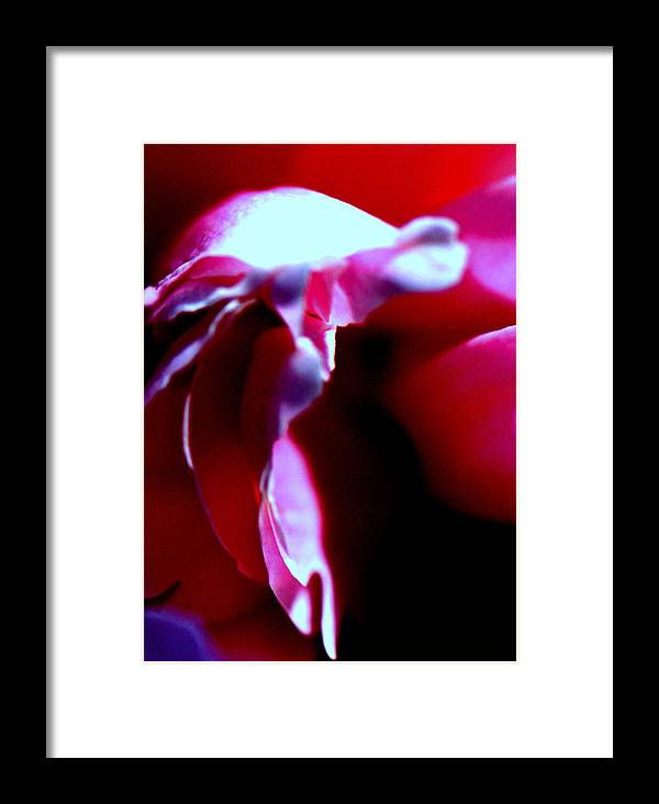 Flower Framed Print featuring the photograph Tearfully by Konstantine Bak