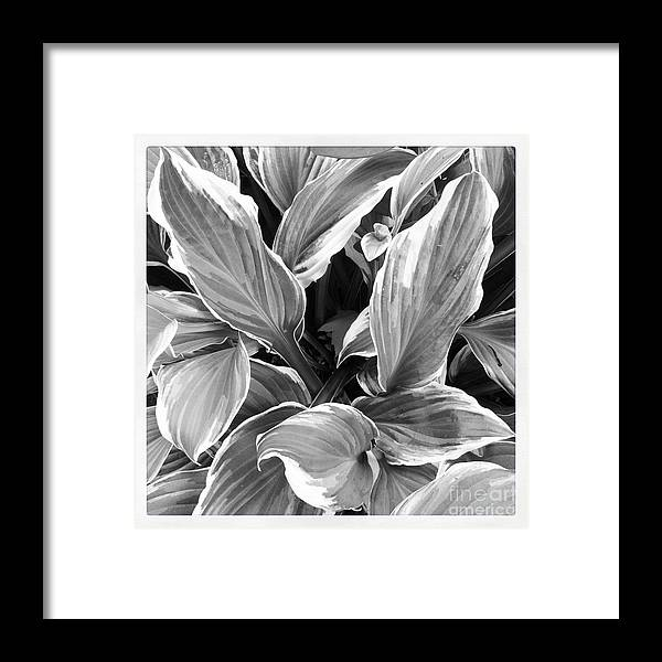 Leaf Framed Print featuring the photograph Texture by Susan Wood