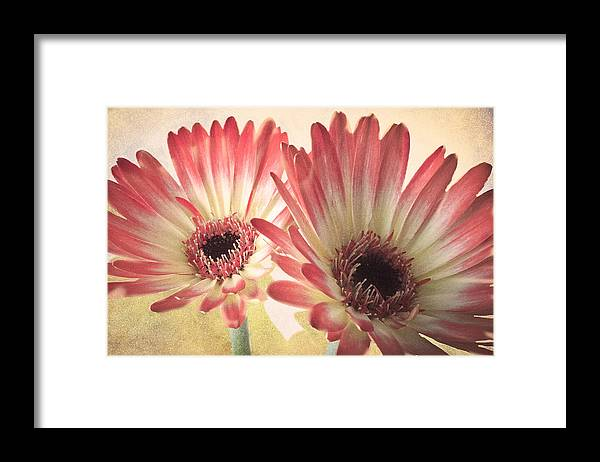 Yellow Framed Print featuring the photograph Textured Gerbras by Fiona Messenger