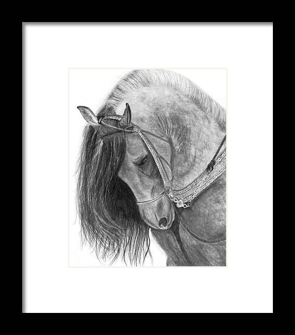 Horse Framed Print featuring the drawing The Andalusian by Bev Newcomer