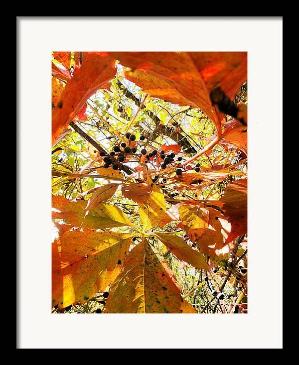 Leaves Framed Print featuring the photograph The Beauty In Dying by Trish Hale