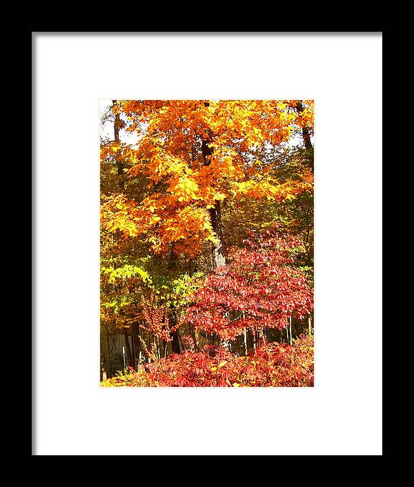 Autumn Framed Print featuring the photograph The Blaze Of Autumn by Mary Ann Southern
