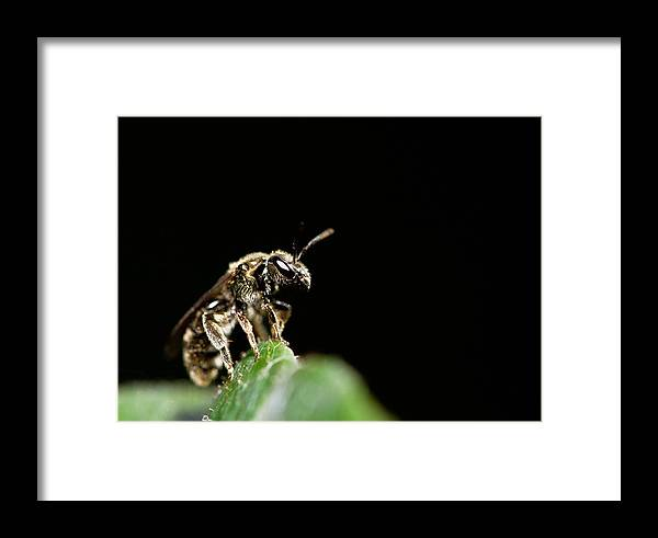 Bug Framed Print featuring the photograph The Bug by Danielle Silveira