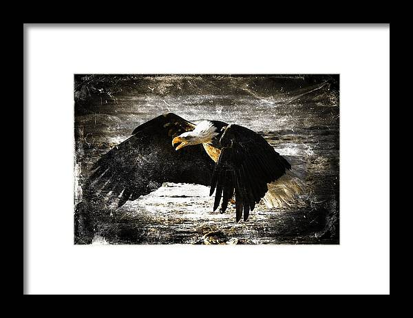 Bald Eagle Framed Print featuring the digital art The Chase by Carrie OBrien Sibley