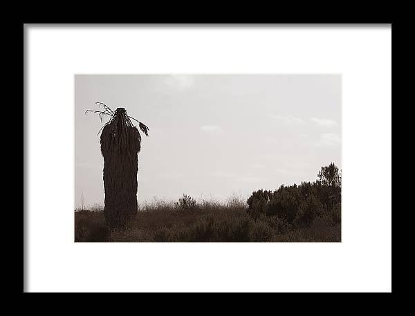 Palm Tree Framed Print featuring the photograph The Chief by Lorraine Devon Wilke