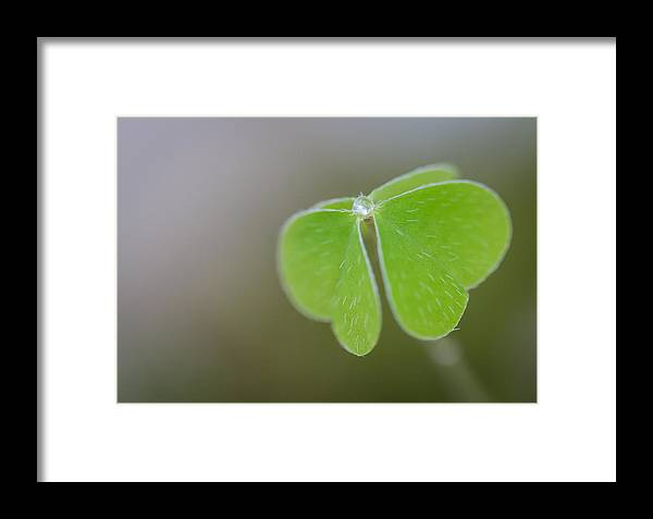 Klee Framed Print featuring the photograph The Cloverleaf by Andreas Levi
