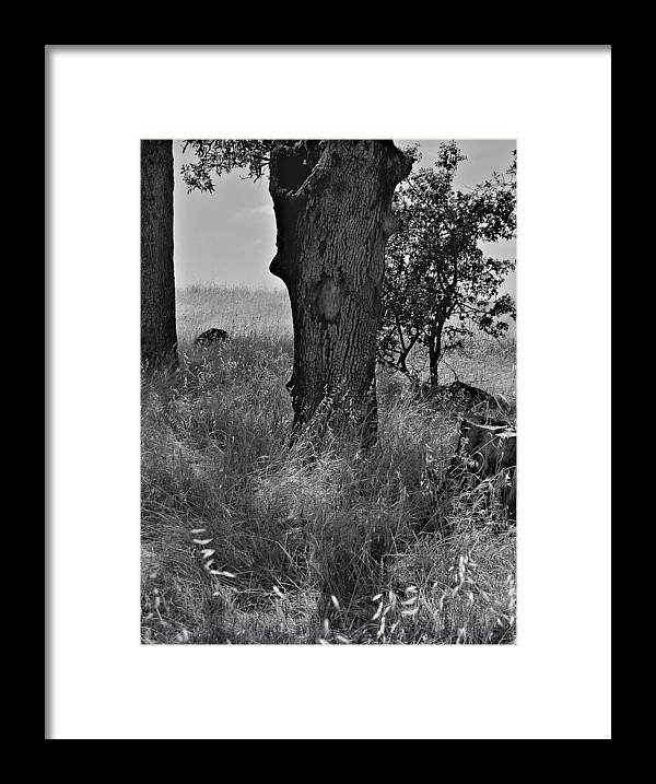 Black And White Photography Framed Print featuring the photograph The Dogdays Of Summer by Tom Mallon