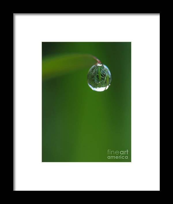 Animal Framed Print featuring the photograph The Drop by Odon Czintos