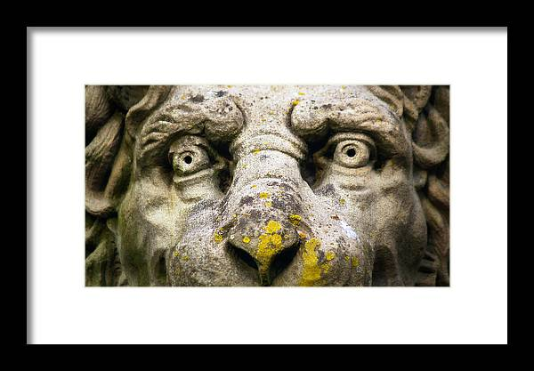 Lion Framed Print featuring the photograph The Face Of A Lion by Brian Mollenkopf