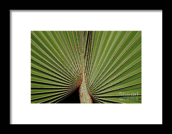 Texas Framed Print featuring the photograph The Fan by Ashley M Conger