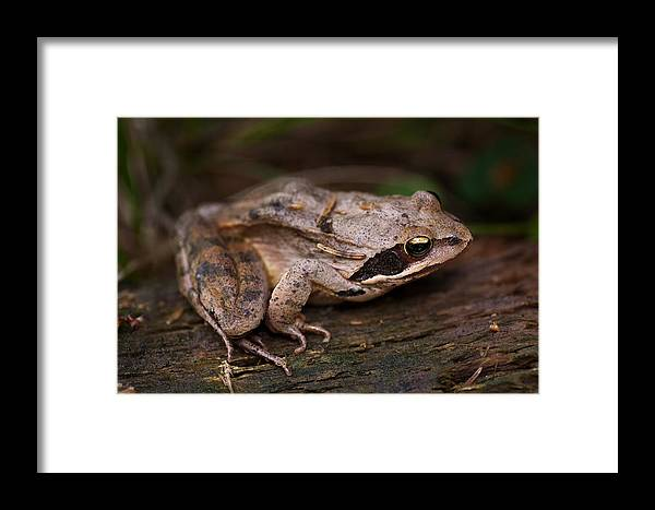 Fauna Framed Print featuring the photograph The Frog by Zoran Buletic