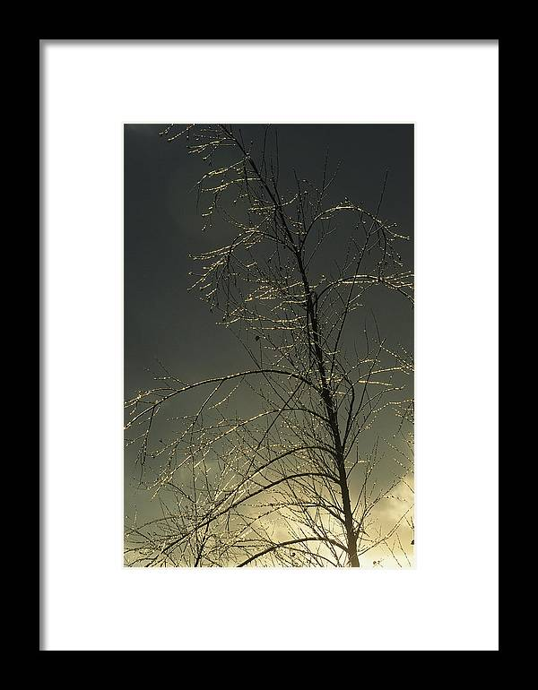 North America Framed Print featuring the photograph The Frozen Branches Of A Small Tree by Raymond Gehman