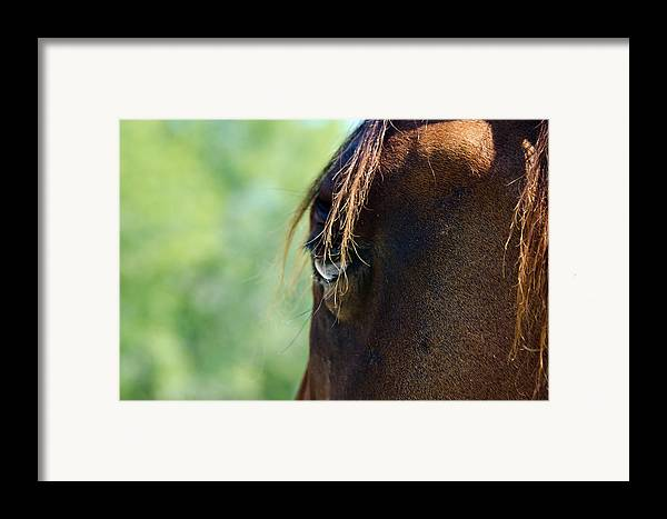 Horse Framed Print featuring the photograph The Gaze by Lisa Moore