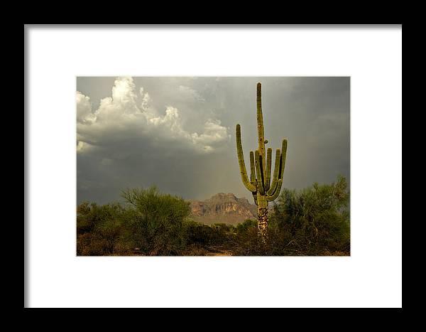 Sunset Framed Print featuring the photograph The Golden Saguaro by Saija Lehtonen