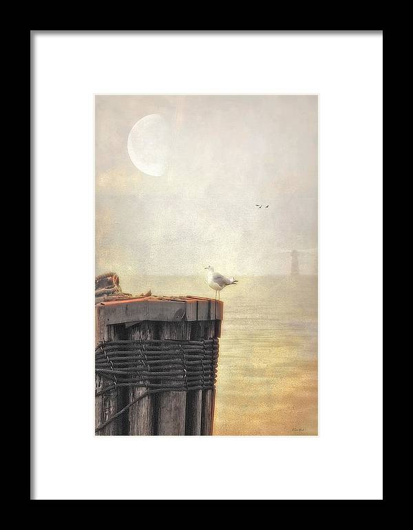 Seascape Framed Print featuring the photograph The Gull On The Groyne by Tom York Images
