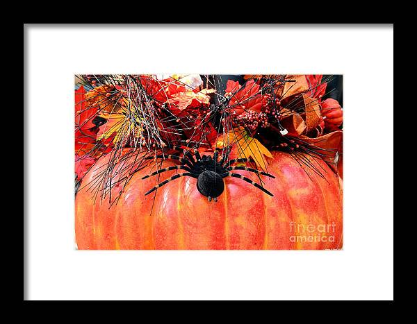 The Harvest Spider Framed Print featuring the photograph The Harvest Spider by Maria Urso