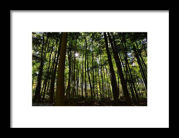 Trees Framed Print featuring the photograph The Heart of Nature by Aryan Ganji