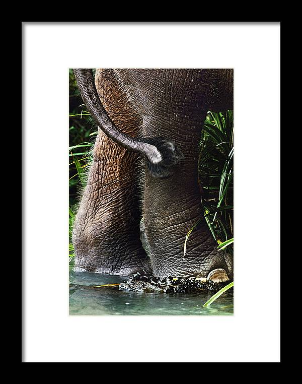 Danum Valley Framed Print featuring the photograph The Hindquarters Of A Malaysian by Mattias Klum