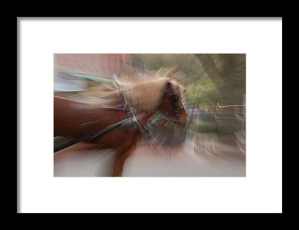 Horse Framed Print featuring the photograph The Horse by Randy J Heath