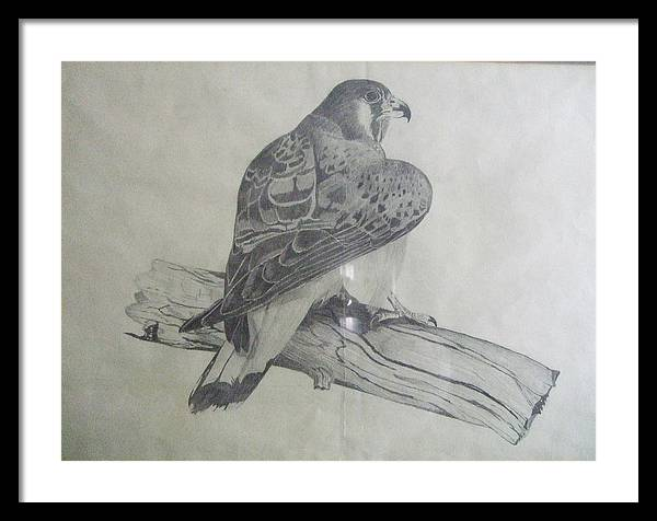 Bird Framed Print featuring the drawing The Hunter by Mark Dermody