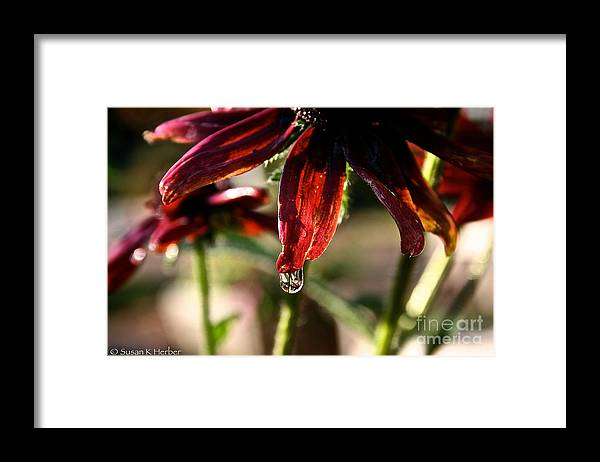 Flower Framed Print featuring the photograph The Last Drop by Susan Herber