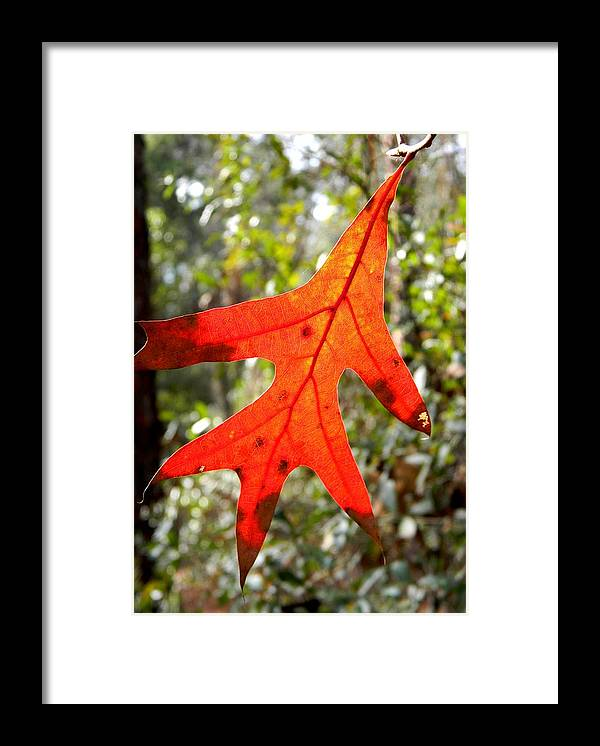 The Last Leaf Framed Print featuring the photograph The Last Leaf by Warren Thompson