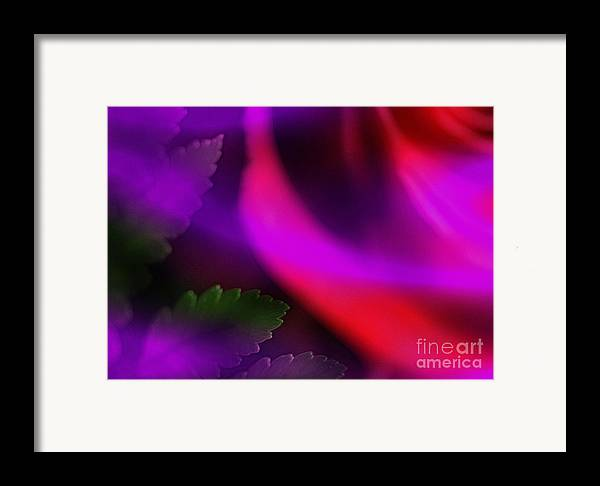 Leaf Framed Print featuring the photograph The Leaf And The Rose by Judi Bagwell