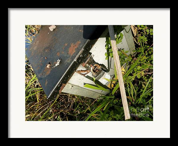 Leaves Framed Print featuring the photograph The Lock Box by Trish Hale