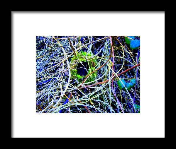 Birds Nest Framed Print featuring the photograph The Lost Nest by Lisa Rose Musselwhite