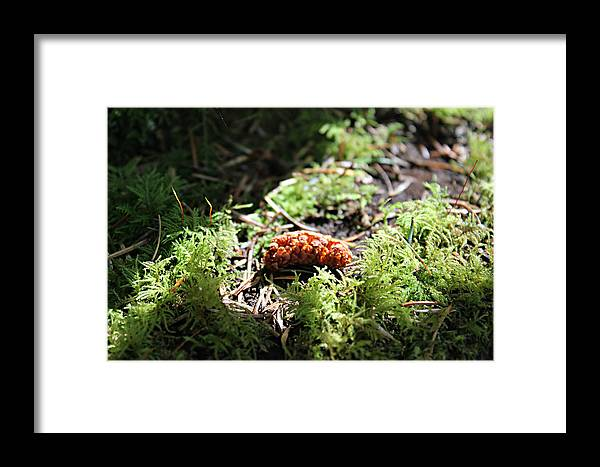 Nature Framed Print featuring the photograph The Mighty Pine Cone by Jo Sheehan