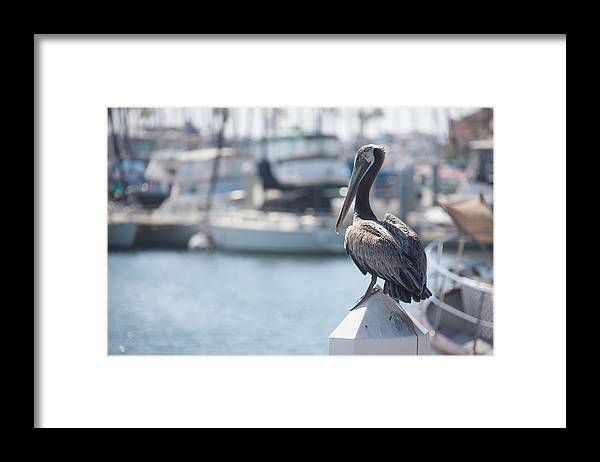 Ralf Framed Print featuring the photograph The Observer by Ralf Kaiser