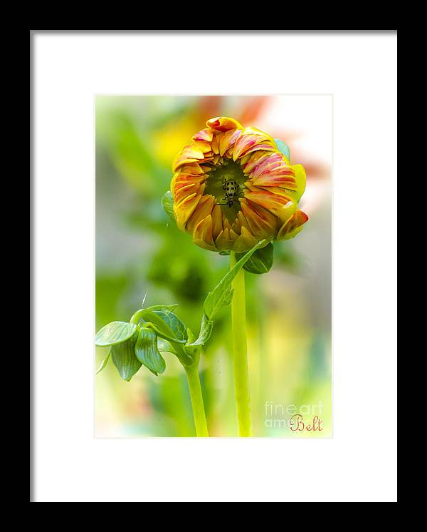 Floral Framed Print featuring the photograph The Opening Of The Fall Season by Christine Belt