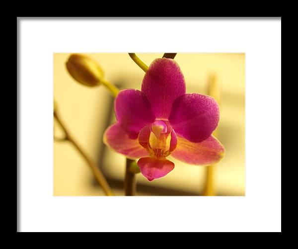 Floral Framed Print featuring the photograph The Original by Teri Schuster