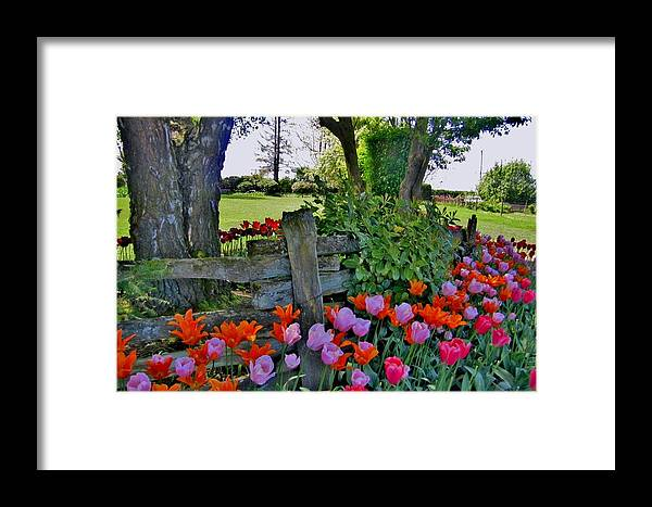 Tulip Framed Print featuring the photograph The Other Fence by Ami Tirana